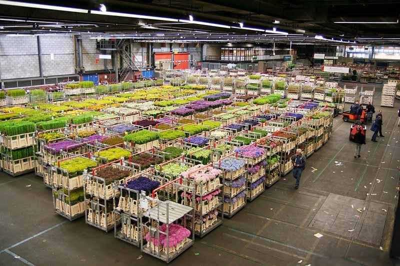 Оптовые поставщики цветов в москве отзывы, цветов ассорти заказать